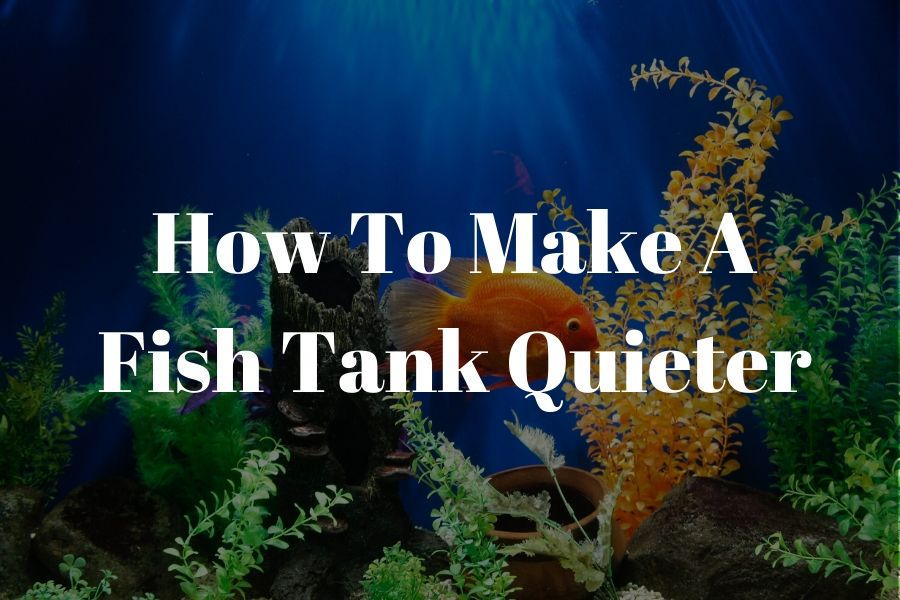 how to make a fish tank quieter featured image