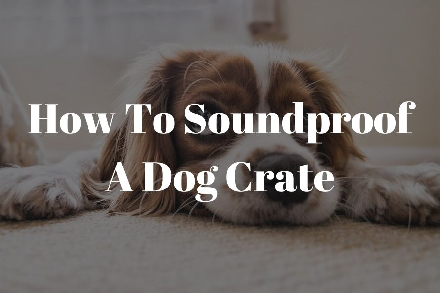 how to soundproof a dog crate featured image (1)