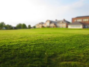 lawn to be mowed